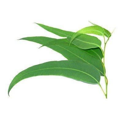 Interiérová esence SPRING NATURE 100 ml - Čirý flakon